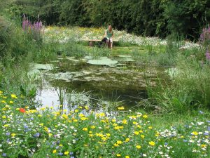 garden pond wildlife